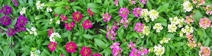 ブログ「ミナ吉のお花屋さん スタッフブログ」