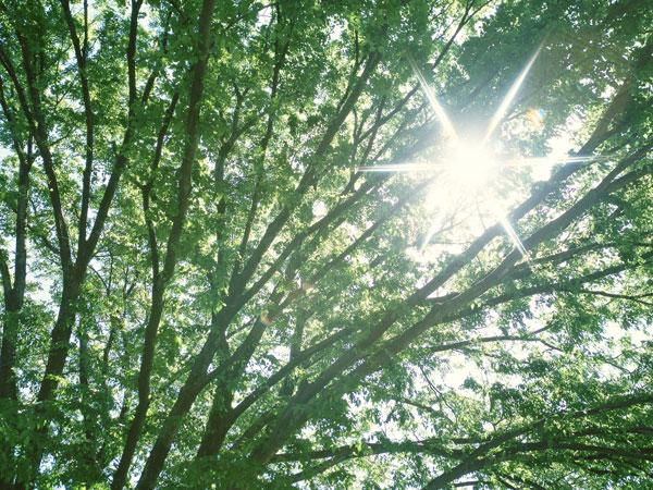 見慣れた風景に「光」を取り入れる